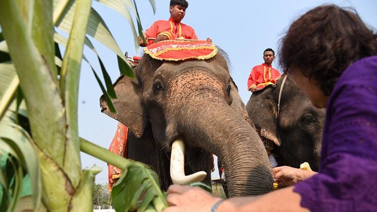 Una joven se abraza a la trompa de un elefante y se desata el caos