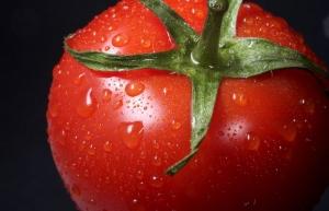 Apoya gobierno de México a productores de tomate en negociaciones con EUA