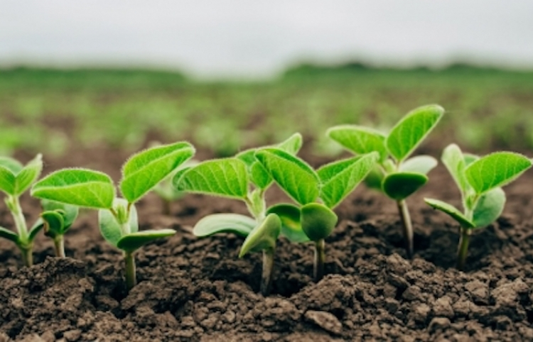 México y EUA impulsarán intercambio comercial agroalimentario