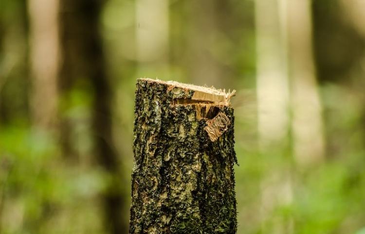 Aumenta tasa de deforestación de Amazonia