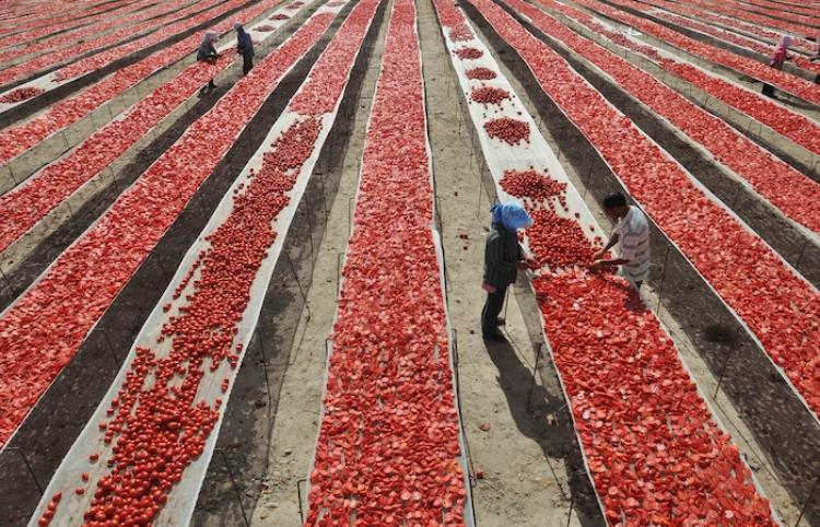 Representantes de México y EUA firman nuevo acuerdo sobre tomate