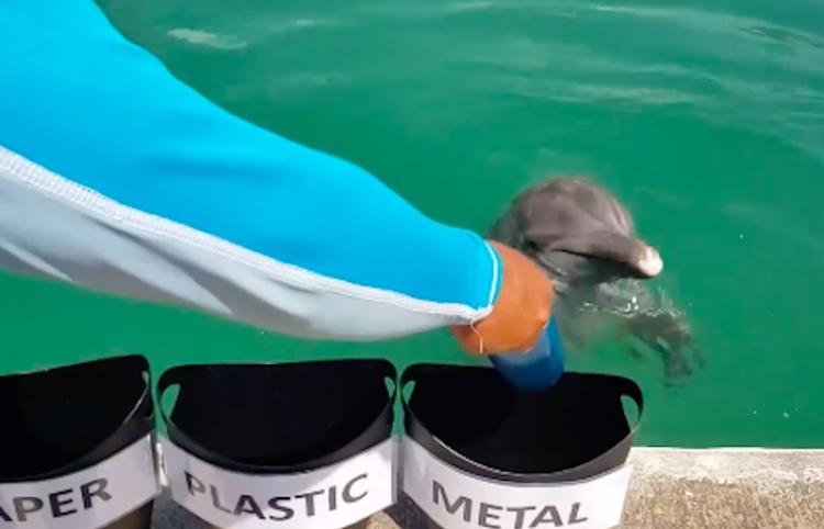 Delfín protege a la naturaleza de esta increíble manera