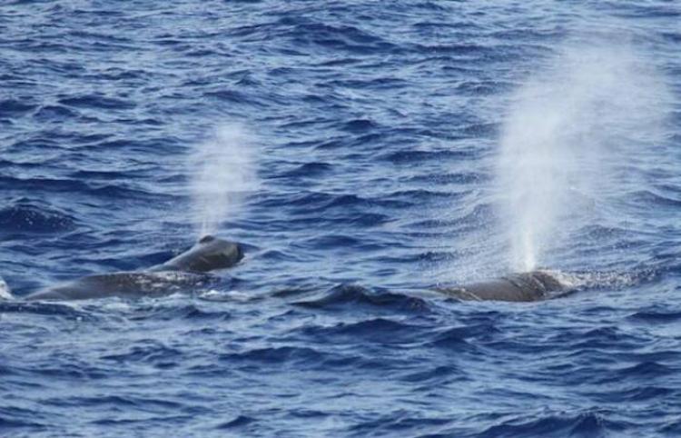 Aves y delfines vuelven a las costas de Perú