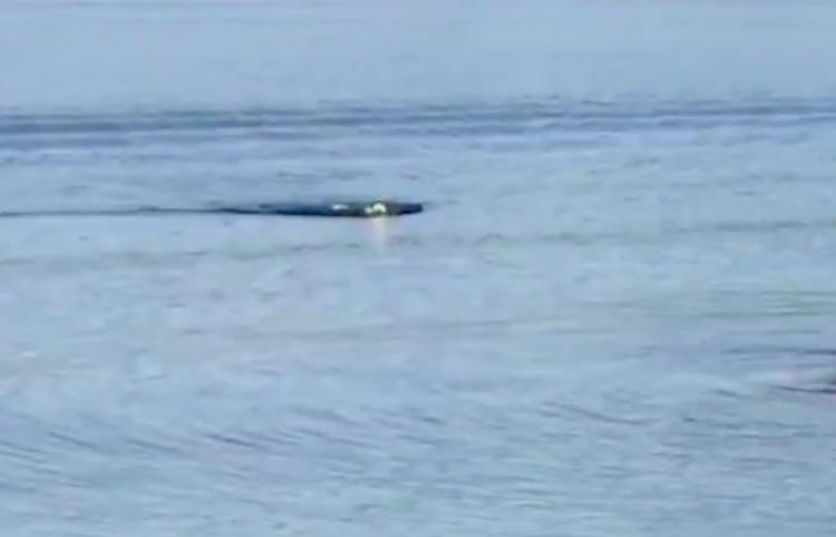 Filman a un águila nadando como una persona en un lago de EE.UU.
