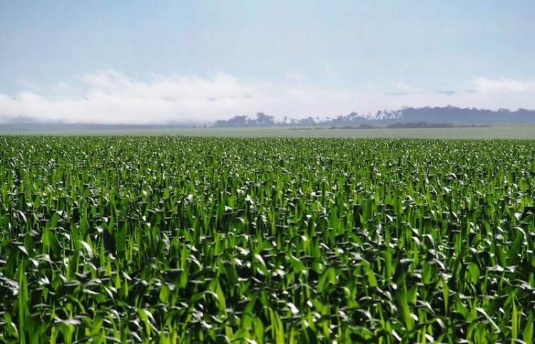 México y Bélgica mejorarán cooperación en materia agroalimentaria