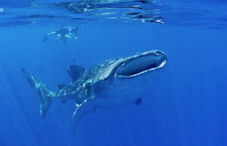 Nuevas regulaciones nuevas para proteger a la especie en peligro de extinción