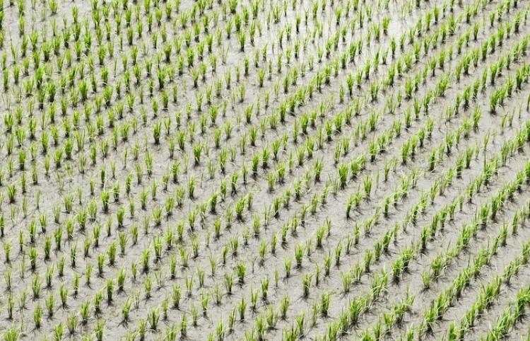 El sector agrícola, el otro gran perjudicado por el volcán de La Palma