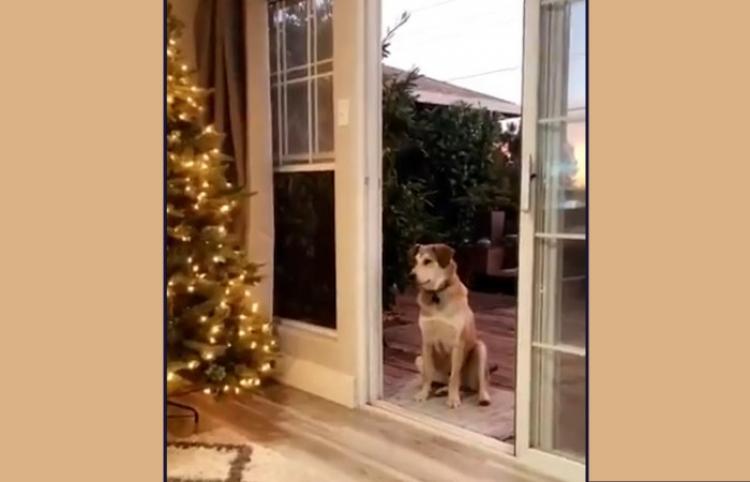 Un perro que espera sentado hasta que le abran una puerta invisible arrasa en las redes