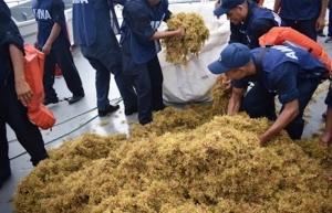 Recolectan más de seis mil toneladas de sargazo en Quintana Roo